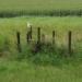 roofvogel bij Waddendijk